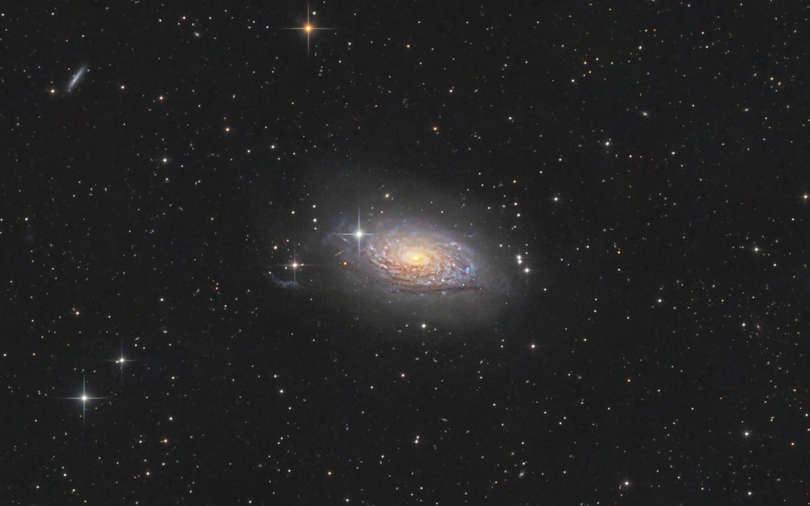 Sonnenblumen Galaxie, Messier 63, Fotografie von Claus Müller