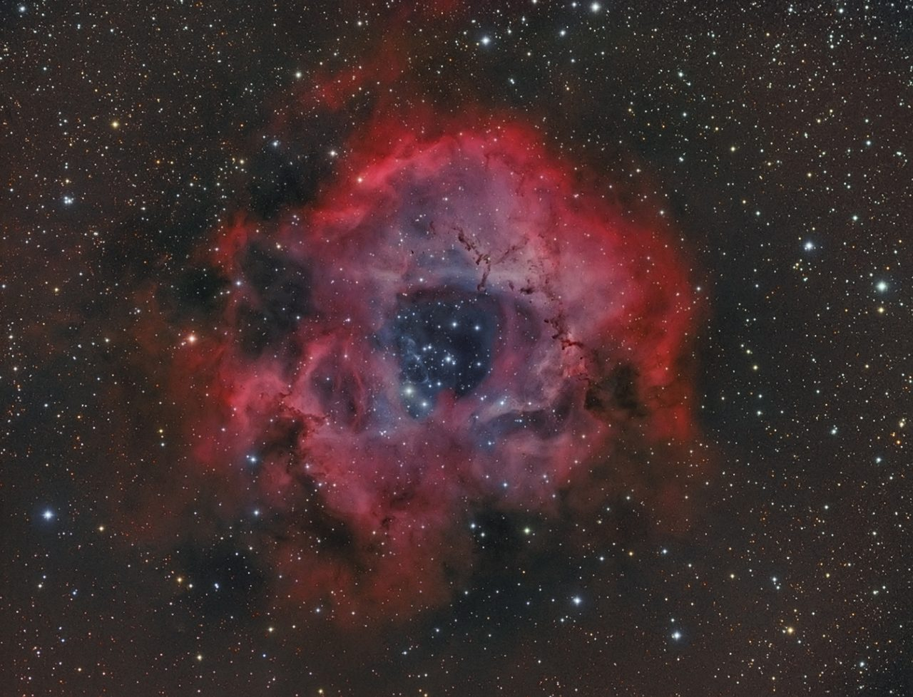 NGC 2244-Rosettennebel, von Paul Schuberth